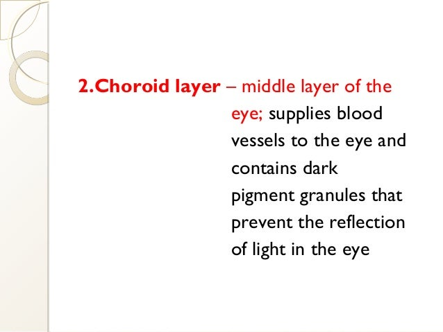 2.Choroid layer – middle layer of the eye; supplies blood vessels to the eye and contains dark pigment granules that preve...