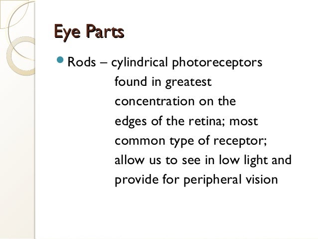 Eye PartsEye Parts Rods – cylindrical photoreceptors found in greatest concentration on the edges of the retina; most com...