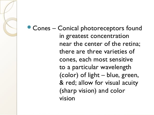 Cones – Conical photoreceptors found in greatest concentration near the center of the retina; there are three varieties o...