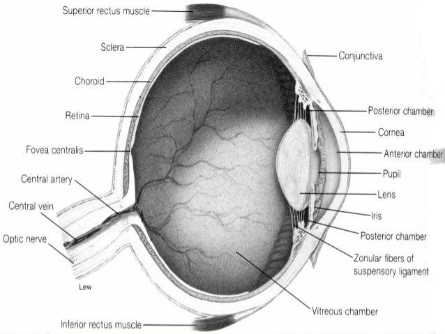Eye Parts - Diagram