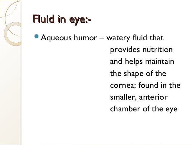 Aqueous humor – watery fluid that provides nutrition and helps maintain the shape of the cornea; found in the smaller, an...