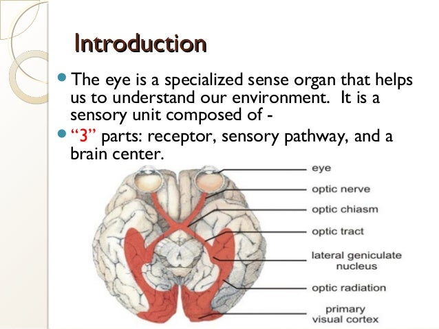 IntroductionIntroduction The eye is a specialized sense organ that helps us to understand our environment. It is a sensor...