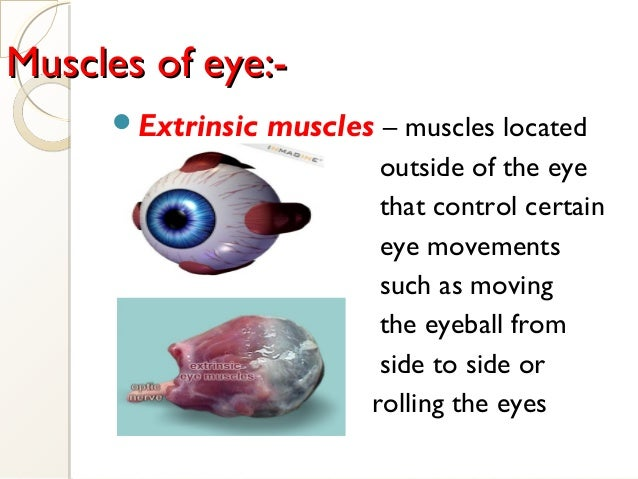 Muscles of eye:-Muscles of eye:- Extrinsic muscles – muscles located outside of the eye that control certain eye movement...