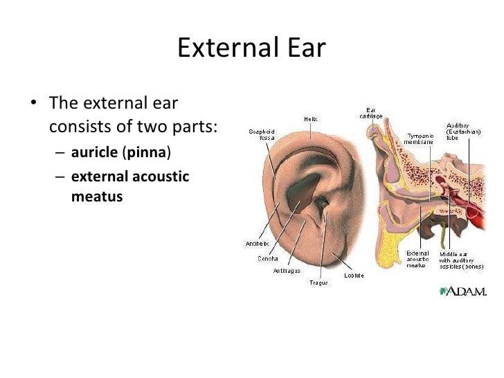 Eye Ear