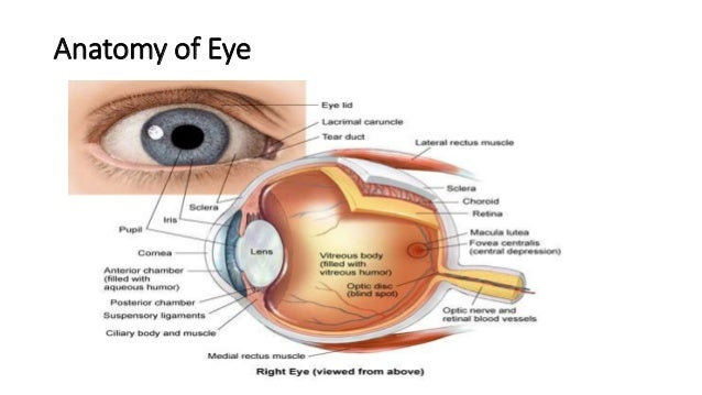 Eye in connective tissue disoreders