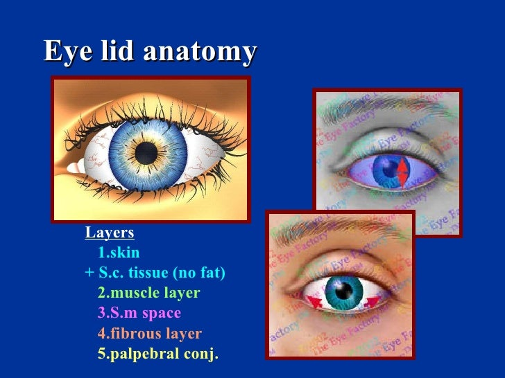 Eye lid anatomy Layers 1.skin + S.c. tissue (no fat) 2.muscle layer 3.S.m space 4.fibrous layer 5.palpebral conj.
