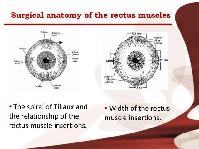 Eye Muscles Anatomy