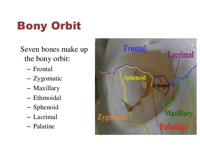 Eye & orbit tumors anatomy, epidemiology, pathology by himani