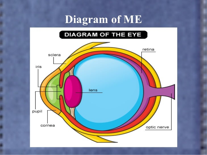 Eye power point drawing of the eye front view 7 diagram ccuart Image collections