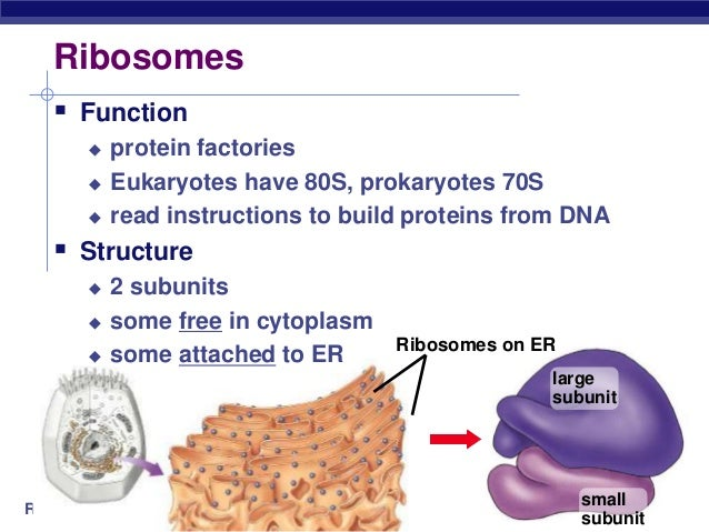 the structure and functions of proteins essay How the structure of proteins is related to their functions (essay) eukaryotic and prokaryotic cells proteins enzymes.