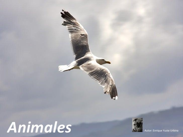 Animales Autor: Enrique Yuste Urbina
