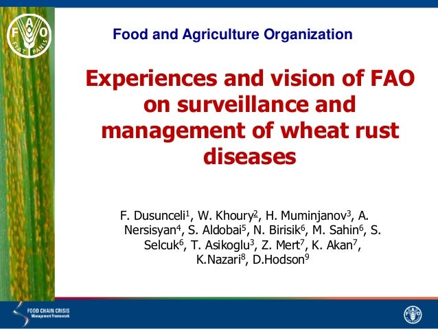 Experiences and vision of FAO on surveillance and management of wheat rust diseases F. Dusunceli1, W. Khoury2, H. Muminjan...