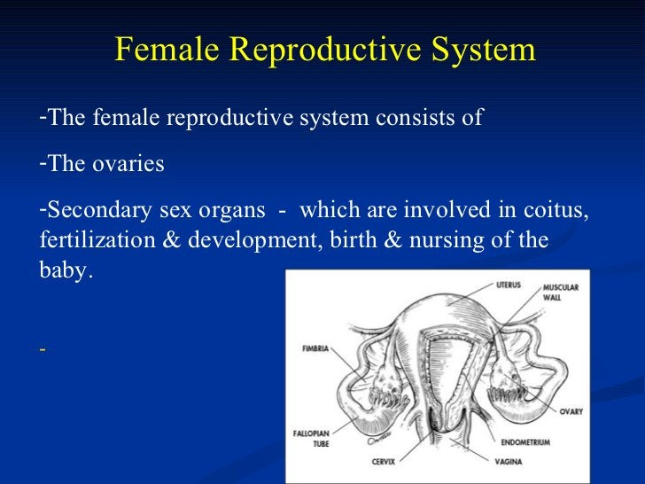 Female Reproductive System-The female reproductive system consists of-The ovaries-Secondary sex organs - which are involve...