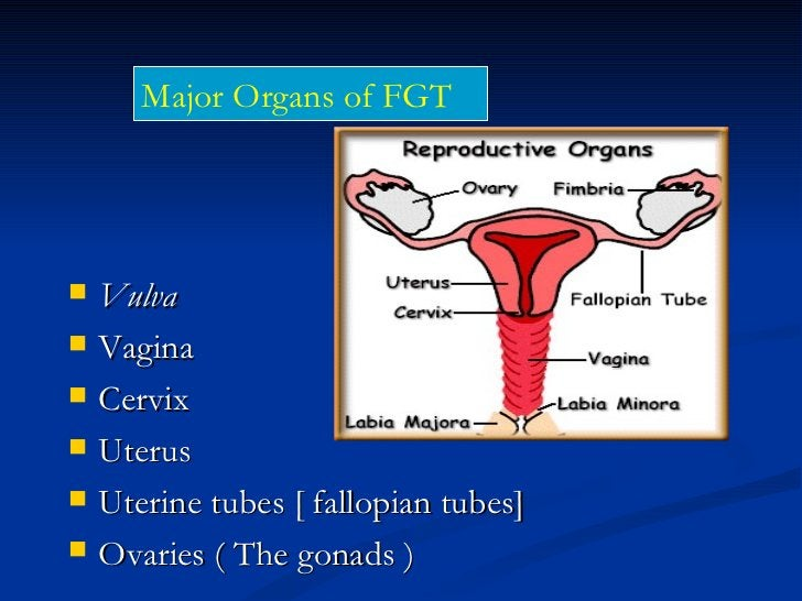 DISEASES OF F.G.T. INCLUDE:-Diseases of the vulva-Diseases of the vagina-Diseases of the cervix-Diseases of the Body of Ut...