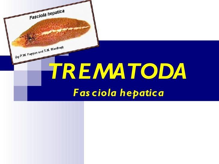 TREMATODA  Fasciola hepatica