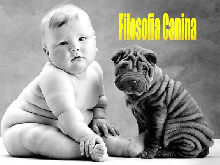 Filosofia Canina