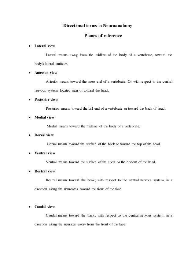 BNS Lab reports – Anatomy Directional Terms Worksheet