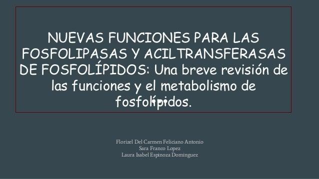 NUEVAS FUNCIONES PARA LAS FOSFOLIPASAS Y ACILTRANSFERASAS DE FOSFOLÍPIDOS: Una breve revisión de las funciones y el metabo...