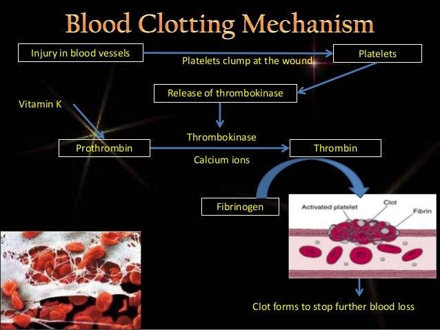 describe the mechanism of blood clotting