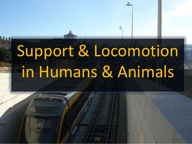 Support & Locomotion in Humans & Animals