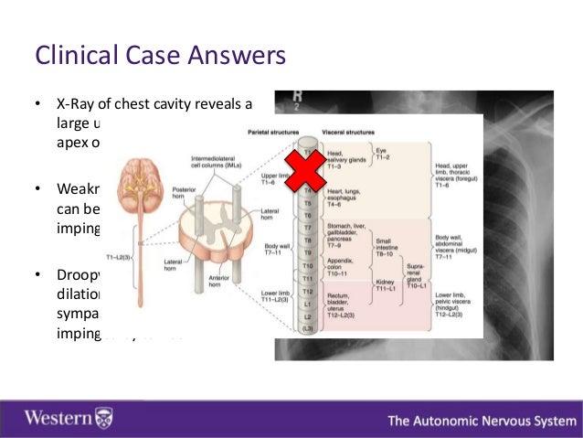 Autonomic Nervous System Study com