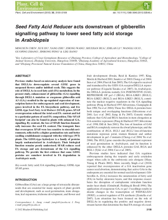 gibberellic acid coursework Of gibberellic acid in mid-course of a-amylase productioni results in a slowing down of a-amylase synthesis, suggesting a continued requirement of ga for eiizyme.