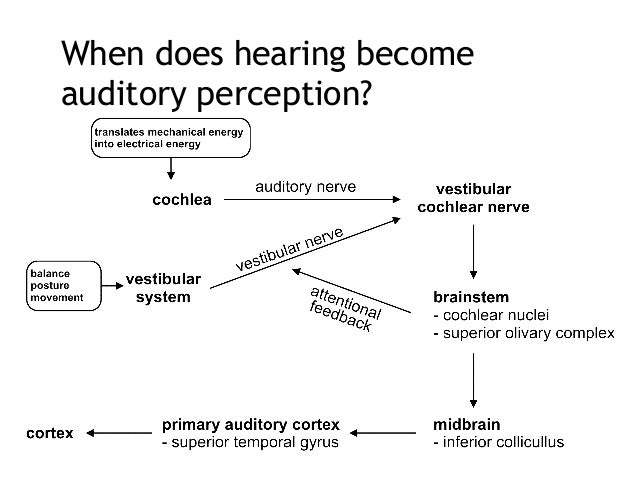 listening and perception Listen up are people really listening what is listening and why is it important this paper will address the viewpoint of listening skills and.