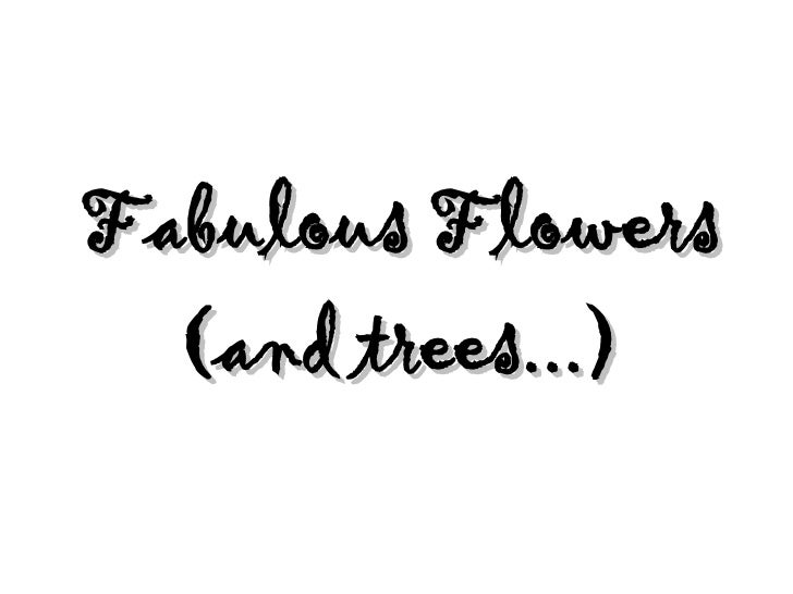 Fabulous Flowers   (and trees...)