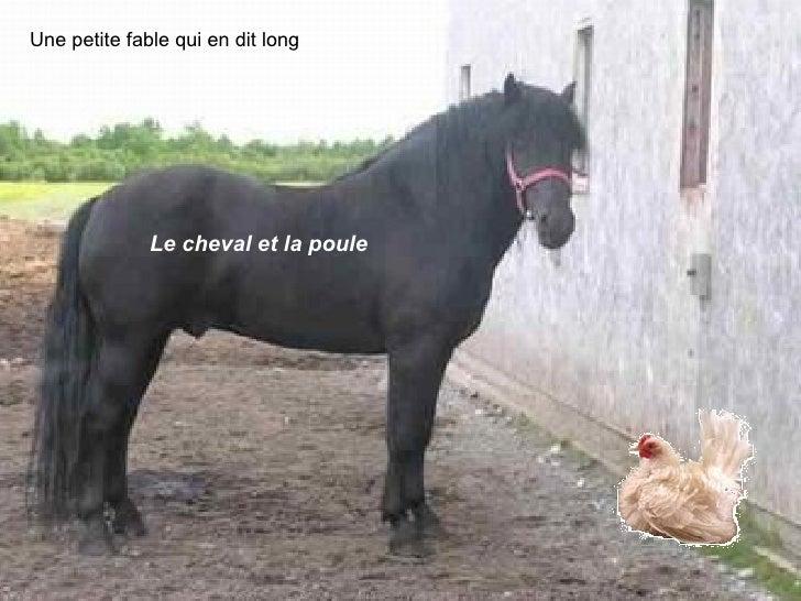 Une petite fable qui en dit long Le cheval et la poule
