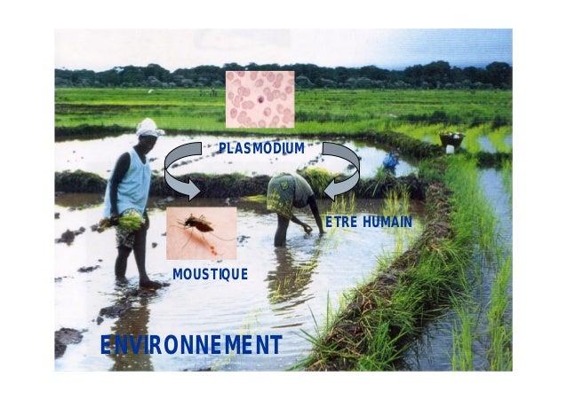 PLASMODIUM                       ETRE HUMAIN     MOUSTIQUEENVIRONNEMENT