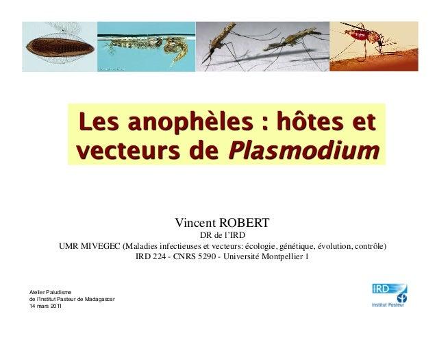 Vincent ROBERT                                              DR de l'IRD            UMR MIVEGEC (Maladies infectieuses et v...