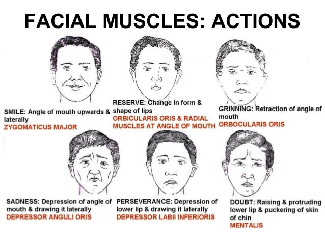 Actions of facial muscles