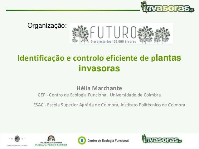 Organização:  Identificação e controlo eficiente de plantas  invasoras  Hélia Marchante  CEF - Centro de Ecologia Funciona...