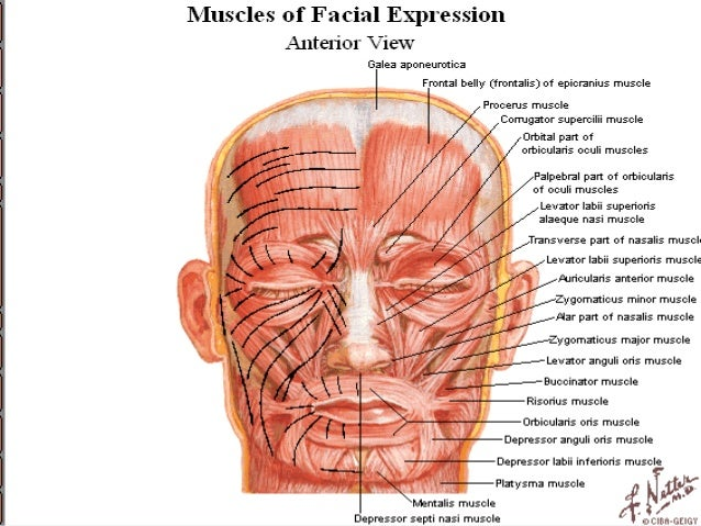 Anatomy of Face and scalp