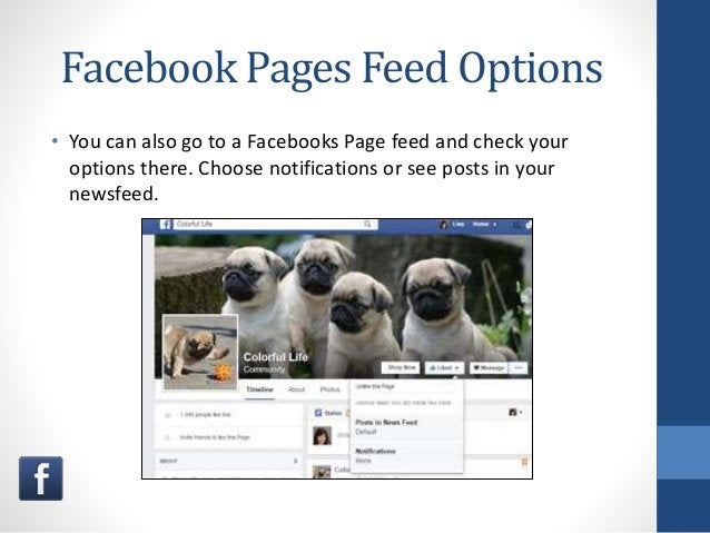 Facebook Pages Feed Options • You can also go to a Facebooks Page feed and check your options there. Choose notifications ...