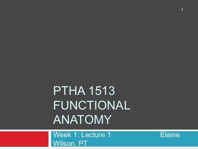PTHA 1513 FUNCTIONAL ANATOMY Week 1: Lecture 1 Elaine Wilson, PT 1