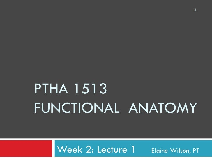 PTHA 1513 FUNCTIONAL  ANATOMY Week 2: Lecture 1    Elaine Wilson, PT