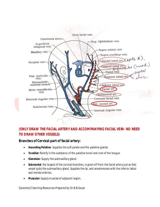 Facial artery dr gosai