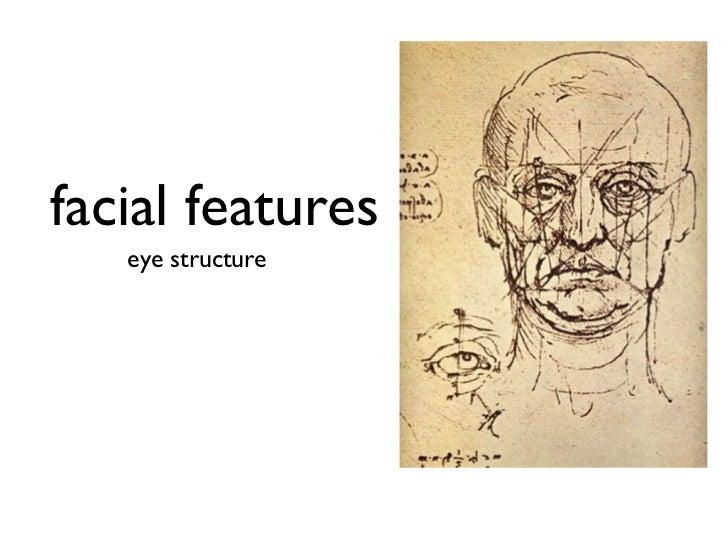 facial features <ul><li>eye structure </li></ul>