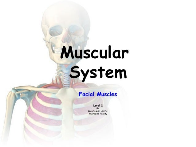Muscular System Facial Muscles Level 2 By Beauty and Holistic Therapies Faculty