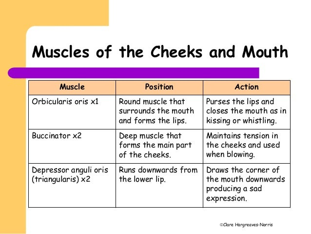 Kissing Muscle That Purses The Lips