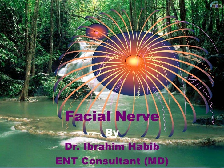 Facial Nerve<br />By<br />Dr. Ibrahim Habib<br />ENT Consultant (MD)<br />