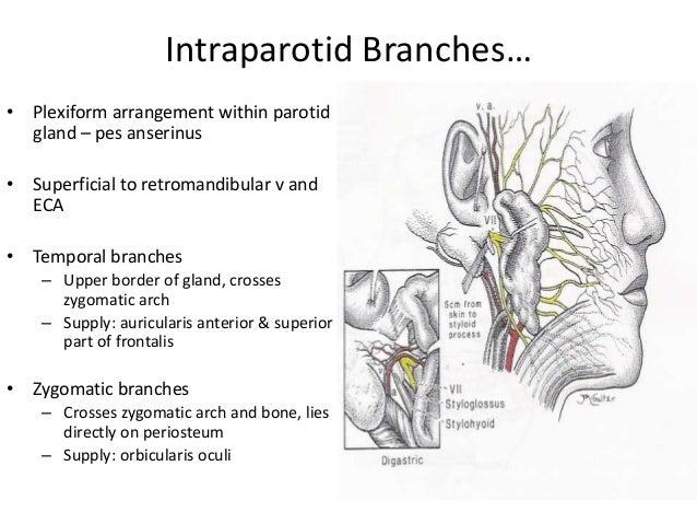 facial nerve traumatic injury and repair