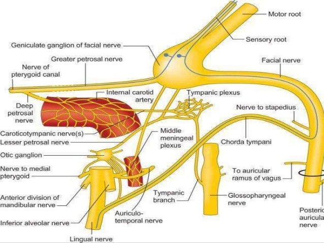 Facial Nerve And Its Applied Aspects