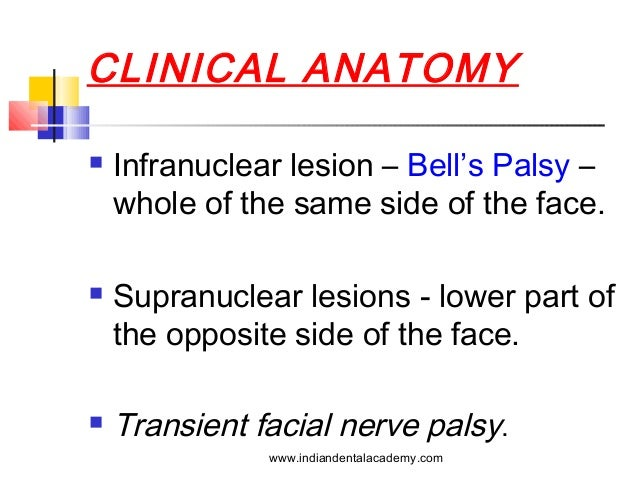 Applied Anatomy Of Facial Nerve Choice Image Human Anatomy Organs