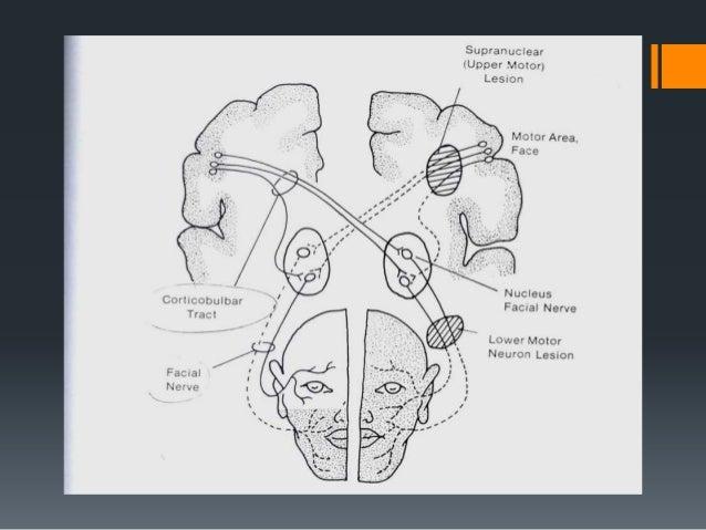 Facial nerve ppt  roger original