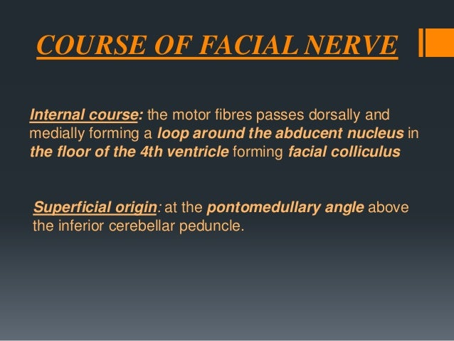The facial nerve is formed mainly of two parts:  1- Facial nerve proper (motor): arising from facial motor nucleus in pons...