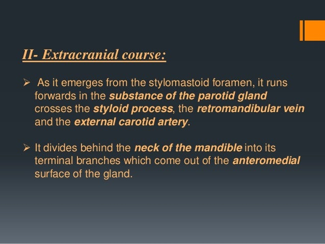 II- At the exit from the stylomastoid foramen  1- Posterior auricular nerve: to the auricularis posterior and the occipita...