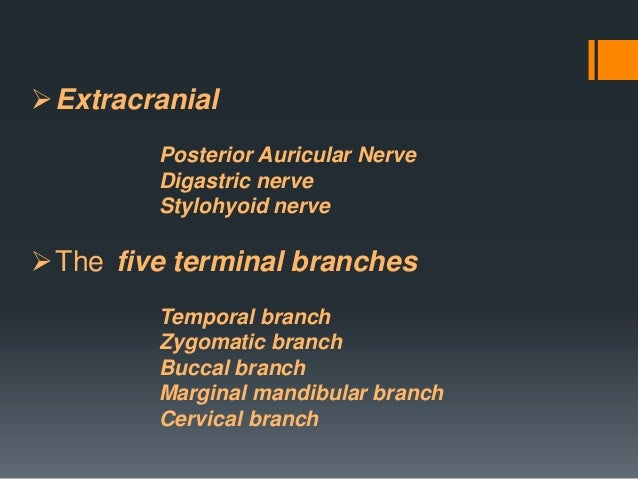 The zygomatic branches of the facial nerve (malar branches) run across the zygomatic bone to the lateral angle of the orbi...
