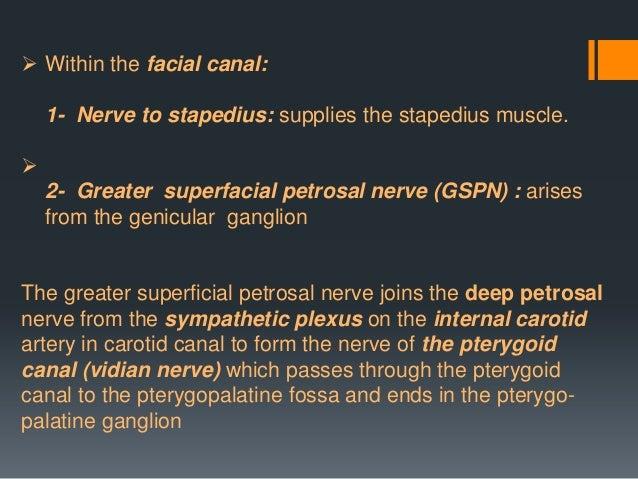  The marginal mandibular branch of the facial nerve passes forward beneath the platysma and depressor anguli oris.  It s...
